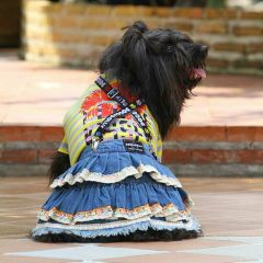 Modern skirt made of jeans for dogs