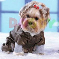 Cooler Raincoat for dogs for the transitional period with light padding