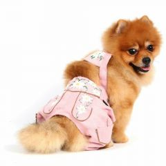Modern leather pants for dogs