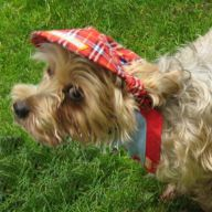Scots dog hat - red peaked cap for dogs