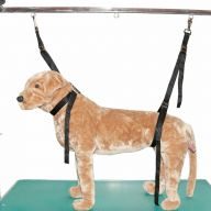 Nylon noose for dogs