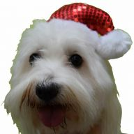Small red Christmas cap for small dogs - dog cap