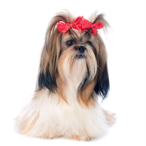 Dog Bows - Dogs Mesh