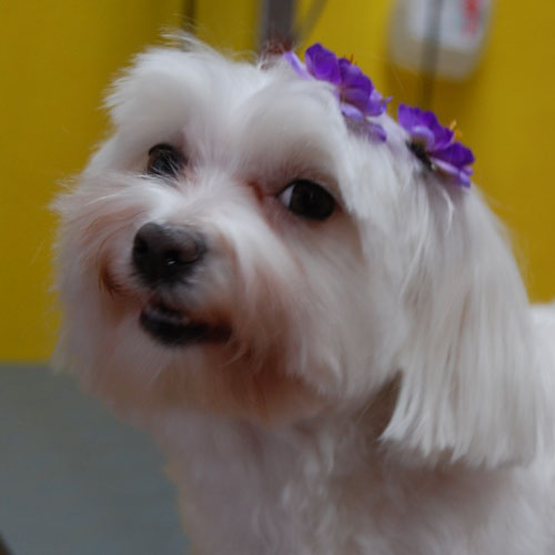 Fabric flowers - flower hair accessories by Blinx pets