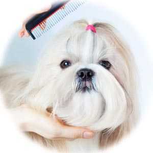 GogiPet Silk Care for dog groomers