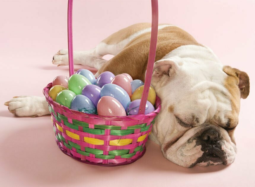 Easter stuff for dogs and cats